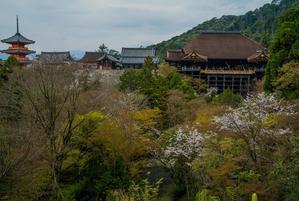 2021京都桜・清水寺 - 鏡花水月