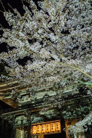 2021滋賀桜・三井寺~ライトアップ - 鏡花水月