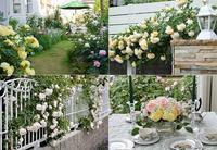 オンライン・オープンガーデンのお知らせ - バラとハーブのある暮らし Salon de Roses