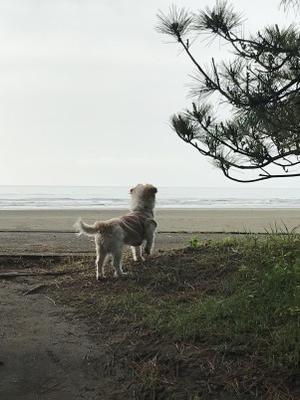 朝の散歩 - プランニングABCブログ