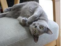 猫のお留守番 ルウちゃん編。 - ゆきねこ猫家族