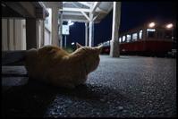 小湊鐵道(5月1日) - とまれみよⅡ
