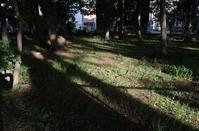 5月の雑木林木漏れ日 - ひのきよ