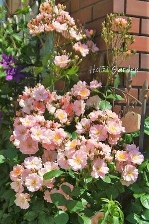 ラブリー系集め(*´ω`*)&保護チュン子 - ハイジの玄関先ガーデン エピソード2♪