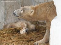 2021年3月天王寺動物園2その10 - ハープの徒然草