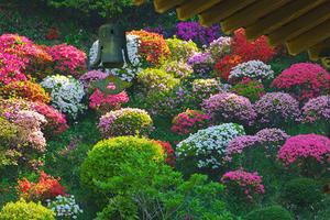 仏行寺のツツジ -