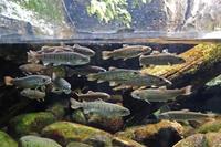水生物館の多彩な水槽群(井の頭自然文化園 March 2020) - 続々・動物園ありマス。