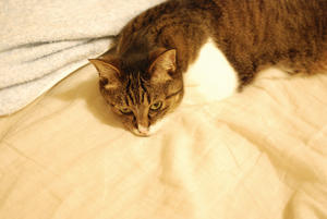 夜の猫たち -
