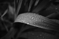 rainy day - My Own Way