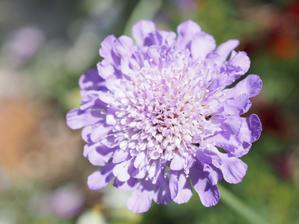 庭の花たち♡ - 島美砂☆ゆるゆる田舎生活