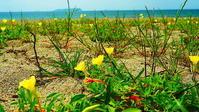 砂浜の花 - 風の香に誘われて 風景のふぉと缶