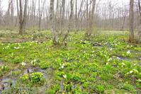 戸隠森林植物園 - 野沢温泉とその周辺いろいろ2