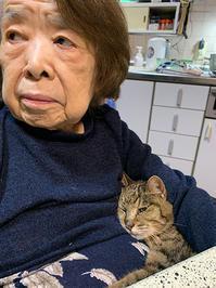 ココちゃん、ありがとね - ぶつぶつ独り言2(うちの猫ら2021)