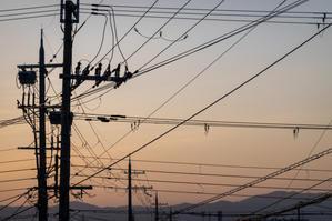 「鳥の声とともに目覚める」 - ほぼ京都人の密やかな眺め Excite Blog版