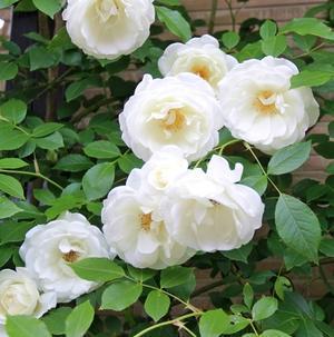 ◆今年はアイスバーグが美しい~! - Soleilの庭あそび・・・布あそび♪