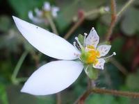 小さな庭の花 - 花と葉っぱ