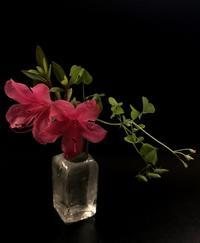 新月 - 花の窓
