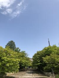 初夏の草花たち - g's style day by day ー京都嵐山から、季節を楽しむ日々をお届けしますー
