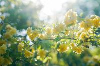 ✿木香薔薇 - ✿happiness✿