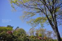 春のポタニカルガーデン・最終章 - FUNKY'S BLUE SKY