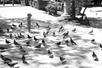 「ある日の境内」 - 一山百楽