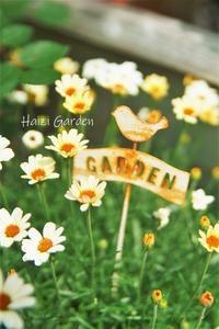 プッチーニの蕾がチョコン(^^)♪ - ハイジの玄関先ガーデン エピソード2♪