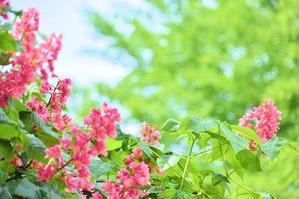 時は流れて    桜のアーチも新緑のアーチに - 前を向いて「ひまわり」