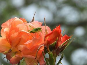 花と虫と母とカラスについて - 60代からの女道