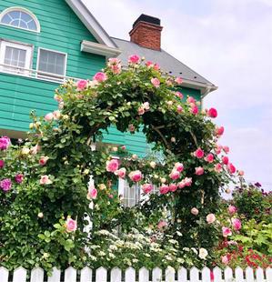 ピエールさまとトーマスさま♡ - 薪割りマコのバラの庭