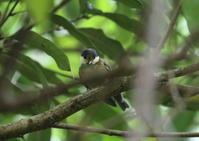 ヤマガラ - 写真で綴る野鳥ごよみ