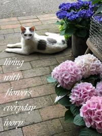 『IVORY 花教室 5 MAY 開催です~♬』 -  Flower and cafe 花空間 ivory (アイボリー)