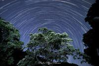 今年もナンジャモンジャの木の下で - Digital Photo Diary
