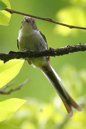 この小鳥の名前が分かりません(水元公園のバードサンクチュアリ) - 旅プラスの日記