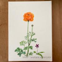 すっかりご無沙汰していましたm(_ _)m - miwa-watercolor-garden