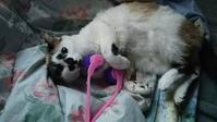 老育17 薔薇と猫とワクチンと - アンのように生きる・・・(老育)