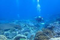21.5.13コーラルガーデン、リーフチェック - 沖縄本島 島んちゅガイドの『ダイビング日誌』
