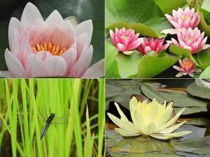 睡蓮と紫蘭とリカちゃん - 60代からの女道