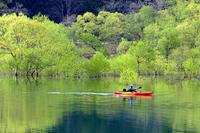 水没林(白川ダム湖) - くろちゃんの写真