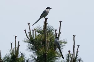 ★先週末の鳥類園(2021.5.8~9) - 葛西臨海公園・鳥類園Ⅱ