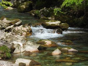 『美しき流れの円原川と植物達』 - 自然風の自然風だより