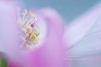 淡いピンクの花水木 - It's only photo 2