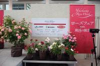 横浜市役所アトリウムで開催中の「ローズフェアwith趣味の園芸」ステージトークショーに元木はるみ代表が出演しました! -  日本ローズライフコーディネーター協会