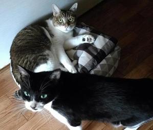 かけがえのない猫2 -