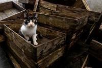 箱入り娘 - 野良猫たちの風景