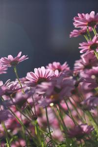 路傍の花 - meの写真はザンス