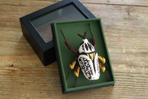 立体刺繍の昆虫向けの標本箱の試作品 - フェルタート(R)・オフフープ(R)立体刺繍作家PieniSieniのブログ