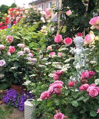 8部咲ガーデンのシーン♡ - 薪割りマコのバラの庭