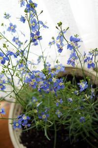窓辺の花… - 根室線の四季*
