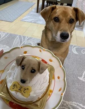 幸せ便り~5月 ④ - Together with the dog  ~ ファンパウズ
