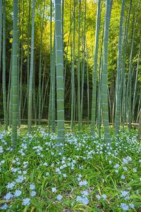 英勝寺のシャガと八重桜 - エーデルワイスブログ
